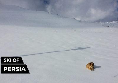 Chien sauvage dans la station de ski de Kakan